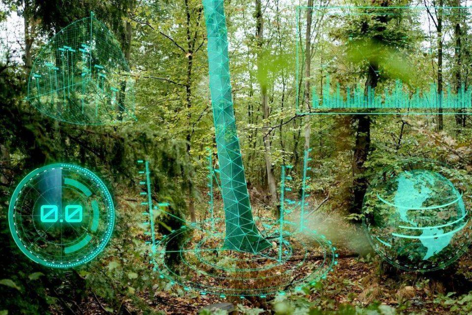 Künstliche Intelligenz für den Wald